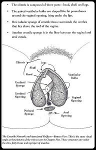 Underlying Vulvar Structures - Women's Anatomy of Arousal_Winston_border